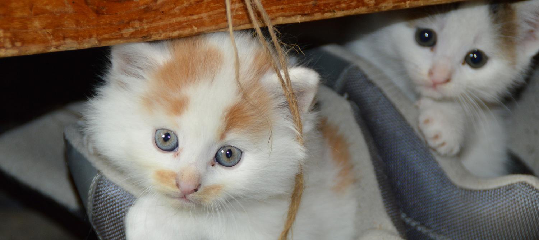 gatos-y-alergias