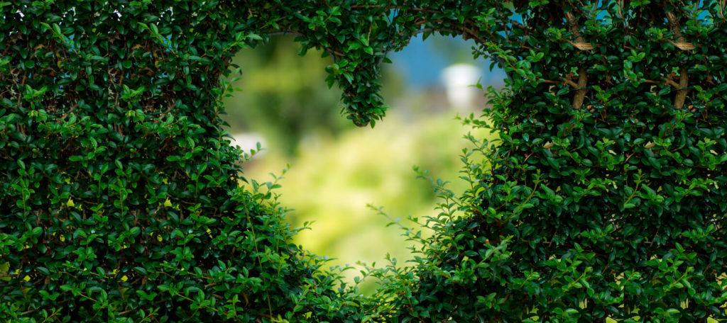 cambios-cuidar-salud-cardiovascular